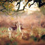 15 dzīvnieku bildes, kuras jūs iemācīs izbaudīt rudens burvību 7