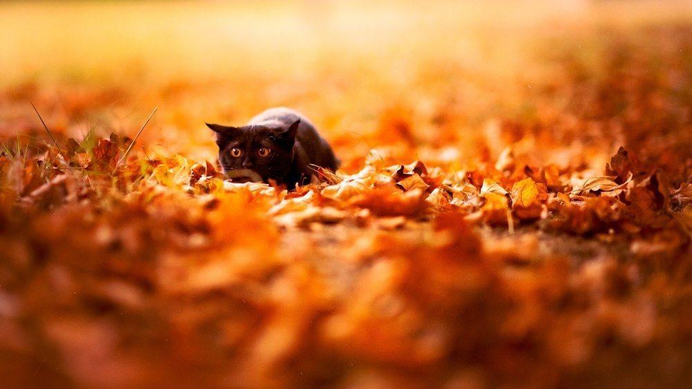 15 dzīvnieku bildes, kuras jūs iemācīs izbaudīt rudens burvību 8