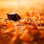 15 dzīvnieku bildes, kuras jūs iemācīs izbaudīt rudens burvību 23