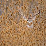 15 dzīvnieku bildes, kuras jūs iemācīs izbaudīt rudens burvību 9