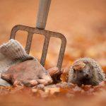 15 dzīvnieku bildes, kuras jūs iemācīs izbaudīt rudens burvību 25