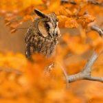 15 dzīvnieku bildes, kuras jūs iemācīs izbaudīt rudens burvību 29