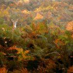 15 dzīvnieku bildes, kuras jūs iemācīs izbaudīt rudens burvību 30