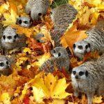 15 dzīvnieku bildes, kuras jūs iemācīs izbaudīt rudens burvību 28