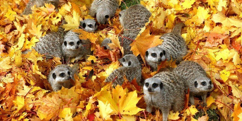 15 dzīvnieku bildes, kuras jūs iemācīs izbaudīt rudens burvību 1