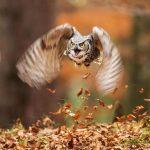 15 dzīvnieku bildes, kuras jūs iemācīs izbaudīt rudens burvību 12