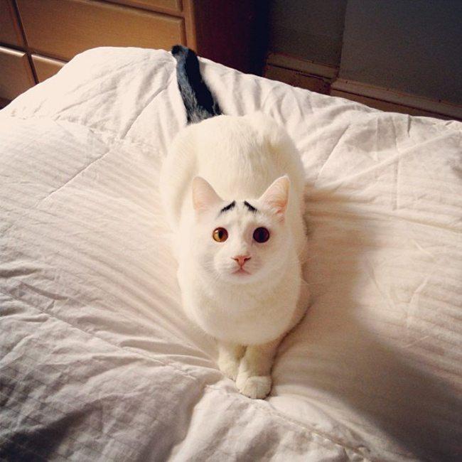 10 kaķi, kurus ''krāsojot'' māte Daba ir īpaši pacentusies 6