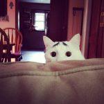 10 kaķi, kurus ''krāsojot'' māte Daba ir īpaši pacentusies 5