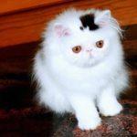 10 kaķi, kurus ''krāsojot'' māte Daba ir īpaši pacentusies 12