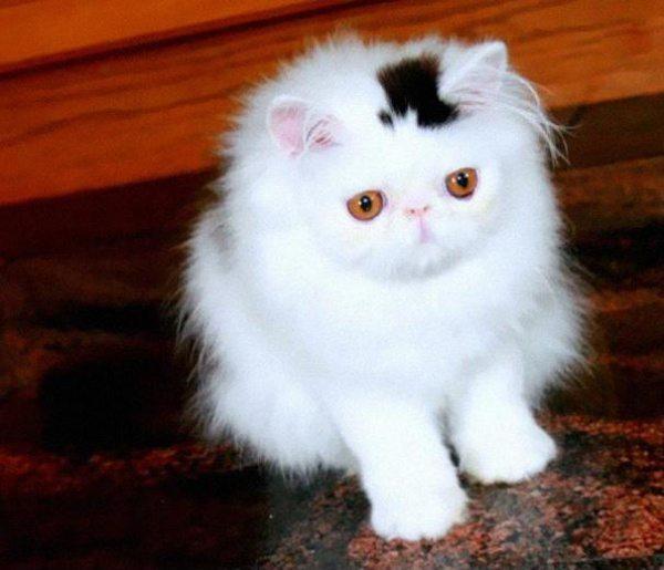 10 kaķi, kurus ''krāsojot'' māte Daba ir īpaši pacentusies 1
