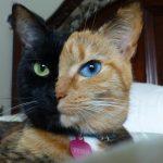 10 kaķi, kurus ''krāsojot'' māte Daba ir īpaši pacentusies 3