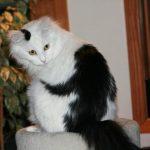 10 kaķi, kurus ''krāsojot'' māte Daba ir īpaši pacentusies 10