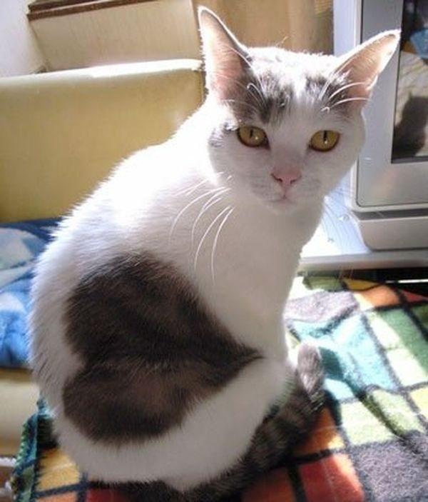 10 kaķi, kurus ''krāsojot'' māte Daba ir īpaši pacentusies 11