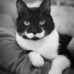 10 kaķi, kurus ''krāsojot'' māte Daba ir īpaši pacentusies 7