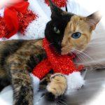 10 kaķi, kurus ''krāsojot'' māte Daba ir īpaši pacentusies 4