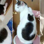 10 kaķi, kurus ''krāsojot'' māte Daba ir īpaši pacentusies 2