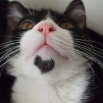 10 kaķi, kurus ''krāsojot'' māte Daba ir īpaši pacentusies 8