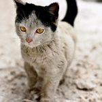 10 kaķi, kurus ''krāsojot'' māte Daba ir īpaši pacentusies 9