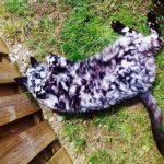 10 kaķi, kurus ''krāsojot'' māte Daba ir īpaši pacentusies 13