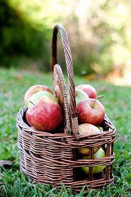 Pilna māja ar āboliem jeb 30 idejas, ko ar tiem iesākt 31