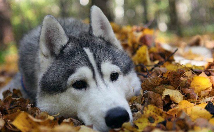 12 apbrīnojami labsirdīgu un draudzīgu suņu šķirnes, īpaši ģimenēm ar bērniem 2
