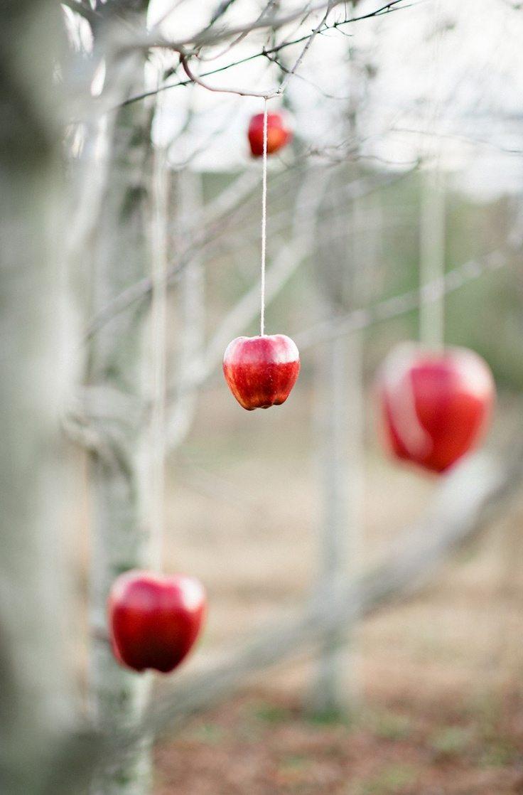 Pilna māja ar āboliem jeb 30 idejas, ko ar tiem iesākt 44