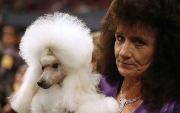 Bilžu galerija, kas apliecina, ka suņi patiešām līdzinās saviem saimniekiem 3