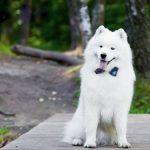 12 apbrīnojami labsirdīgu un draudzīgu suņu šķirnes, īpaši ģimenēm ar bērniem 4