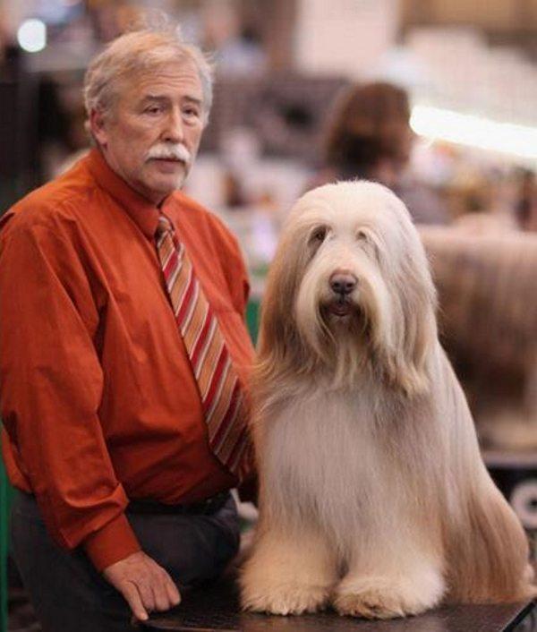 Bilžu galerija, kas apliecina, ka suņi patiešām līdzinās saviem saimniekiem 5