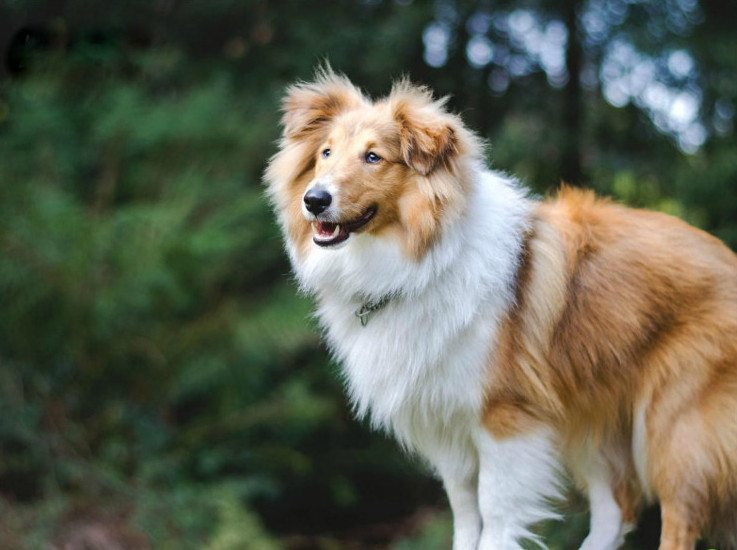 12 apbrīnojami labsirdīgu un draudzīgu suņu šķirnes, īpaši ģimenēm ar bērniem 1