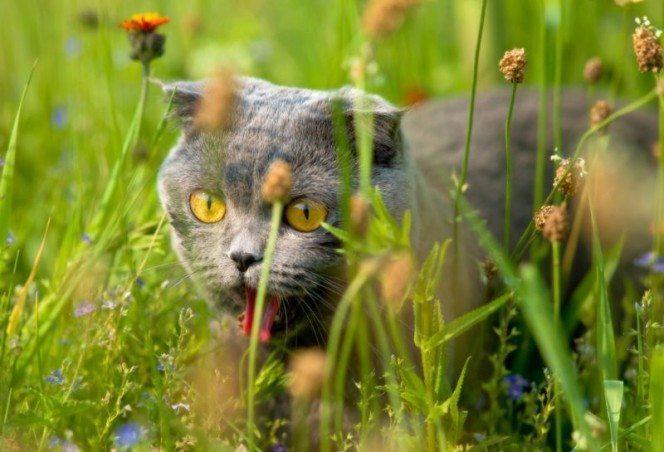 Pārsteidzoši! Kaķu slimība glābs cilvēkus no onkoloģijas saslimšanām 1