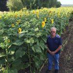 Savas sievas piemiņai vīrs iestādīja 160 hektārus ar saulespuķēm 7