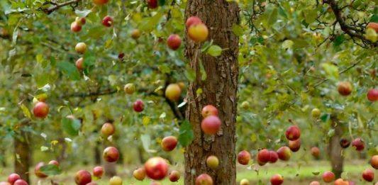 Pavasaris nav aiz kalniem, sāc plānot savu augļudārzu jau tagad! Kas Tev būtu jāzina? 2