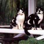 5 kaķu body-art piemēri. Ko tu par to domā? 3