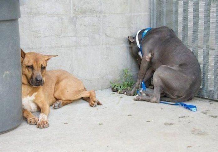 Ja pamani, ka tavs mīlulis dara ŠĀDI - nekavējoties ved viņu pie veterinārārsta! 1