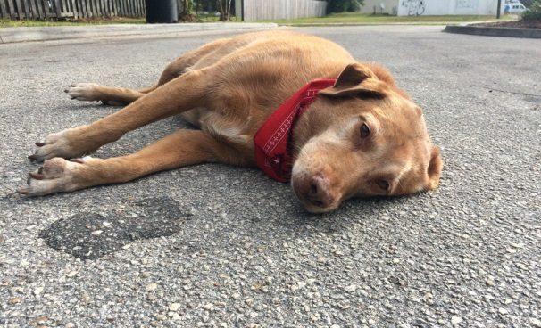 Kad šī suņa saimnieks nomira, suņa reakcija pat aizkustināja rūdītākos policistus 1