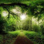 Seno ģermāņu horoskops. Kurš koks atbilst tev un kā tas ietekmē tavu raksturu? 1