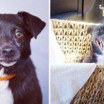 20 suņi un kaķi pirms un pēc nonākšanas ģimenē (2. daļa) 1