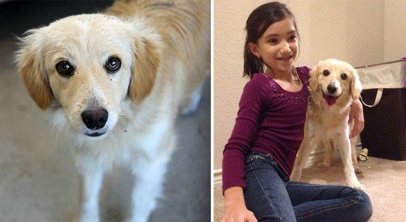 20 suņi un kaķi pirms un pēc nonākšanas ģimenē (2. daļa) 17