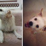 20 suņi un kaķi pirms un pēc nonākšanas ģimenē (2. daļa) 16