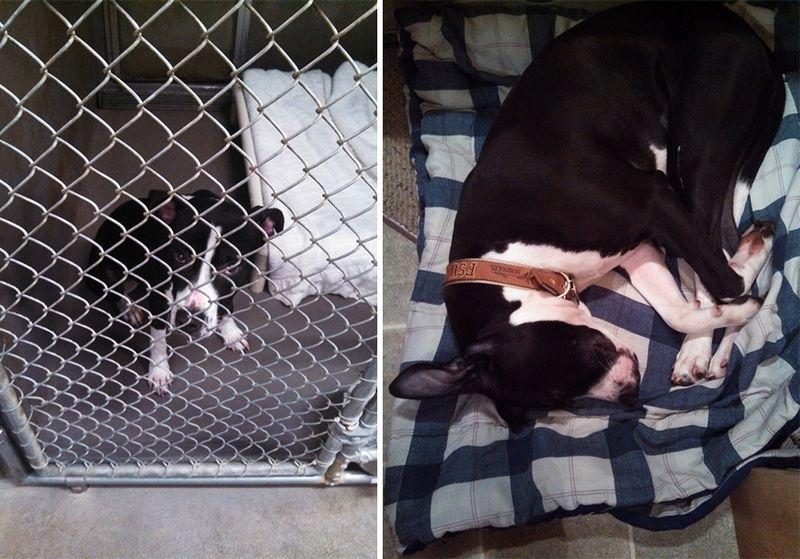 20 suņi un kaķi pirms un pēc nonākšanas ģimenē (2. daļa) 13