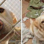 20 suņi un kaķi pirms un pēc nonākšanas ģimenē (2. daļa) 7