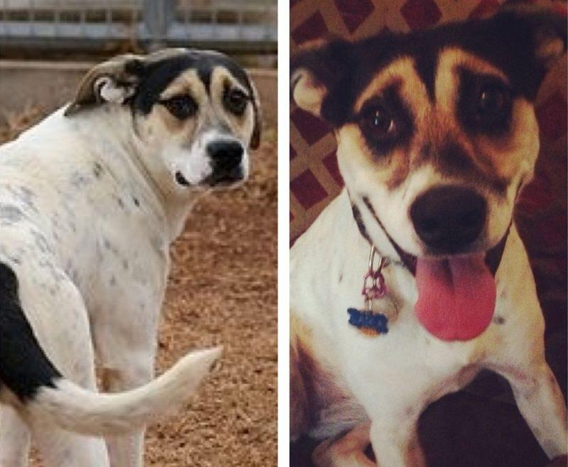 20 suņi un kaķi pirms un pēc nonākšanas ģimenē (2. daļa) 8