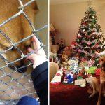 20 suņi un kaķi pirms un pēc nonākšanas ģimenē (2. daļa) 5