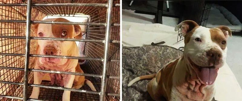 20 suņi un kaķi pirms un pēc nonākšanas ģimenē (2. daļa) 11