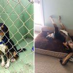 20 suņi un kaķi pirms un pēc nonākšanas ģimenē (2. daļa) 12