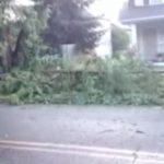 Varas iestādes pieprasīja nocirst veco koku, kā rīkojās šī sieviete? 2
