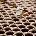 Mākslinieks ir izveidojis instalāciju no 66000 glāzēm lietus ūdens (+video) 4