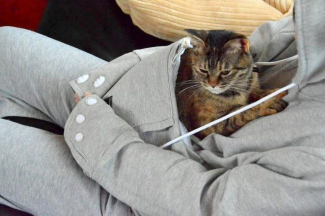 Pasaule kļūtu labāka, ja katram kabatā būtu pa kaķēnam 17