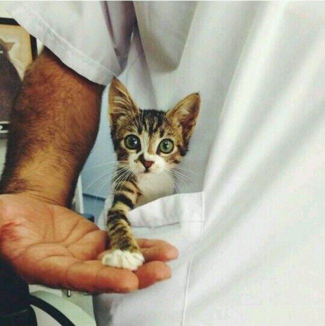Pasaule kļūtu labāka, ja katram kabatā būtu pa kaķēnam 18